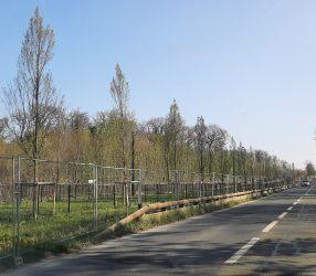 Agrandir Végétalisation des abords des voies de tram